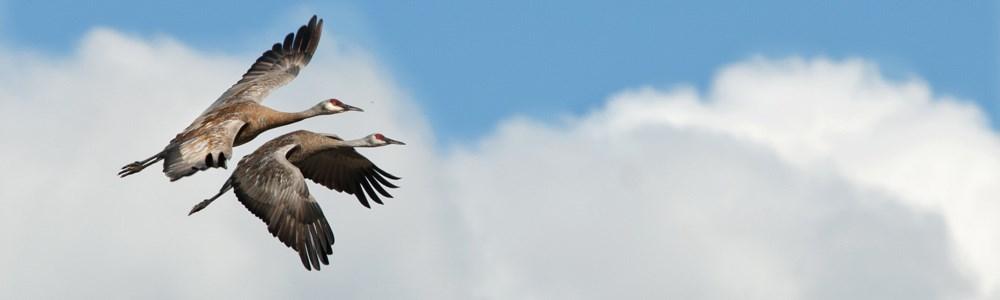 Bird Species detection using Python